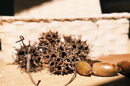 かっこいい秋の木の実