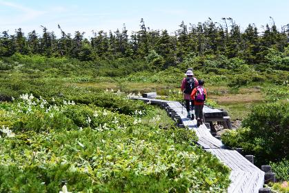 福島県 東吾妻山に登山する親子 小学生 母親 子ども ファミリー 木道 トレッキング 湿原