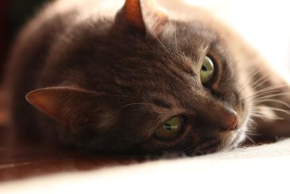 ぼーっとする猫