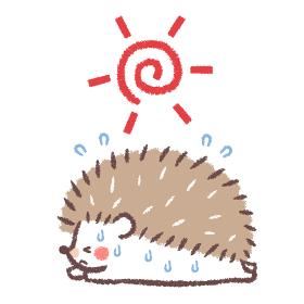 熱中症のハリネズミと太陽2