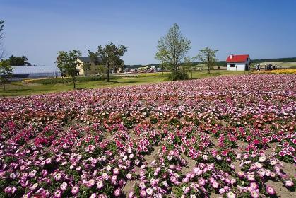 四季彩の丘 花園