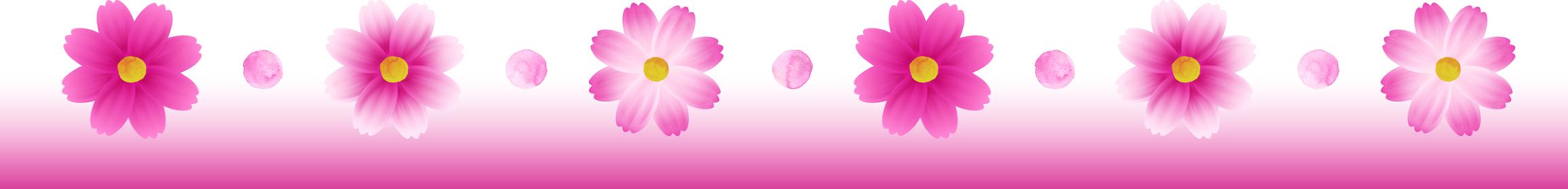 ピンクのグラデーションのコスモスのカットイラスト、ライン状の装飾、秋イメージ