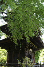 三重塔と新緑の葉