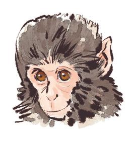申 猿 さる  小猿 こざる 顔
