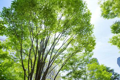 青空と新緑の背景素材