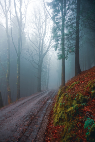 road in the forest in foggy days in Bilbao, Spain