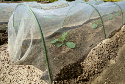 虫よけネットをした野菜