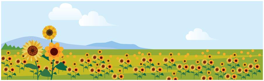 夏の季節のひまわり畑