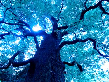 大木からの木漏れ日