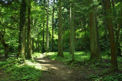 高尾山の森・登山道からの風景