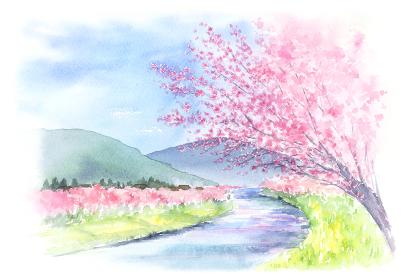 山と川と桜の風景 水彩画