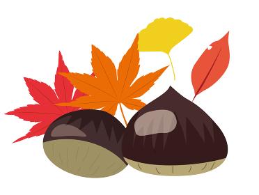 秋の栗イラスト