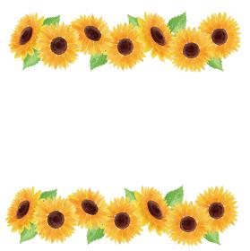 ひまわり ヒマワリ 向日葵 枠 フレーム 上下 夏 花 イラスト 手描き