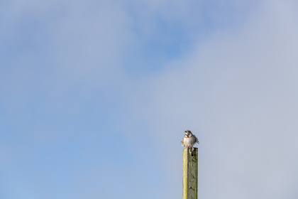 朝日を浴びて鳴く信州の夏鳥