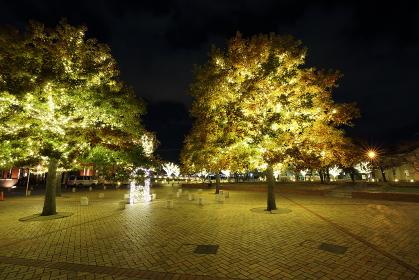 街の公園のクリスマスイルミネーション