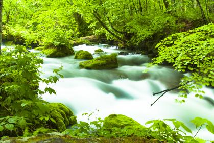 新緑かおる奥入瀬渓流