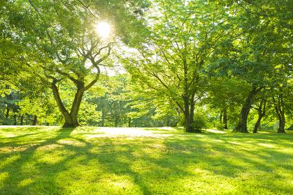 公園 太陽