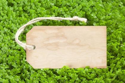 木製タグと新芽
