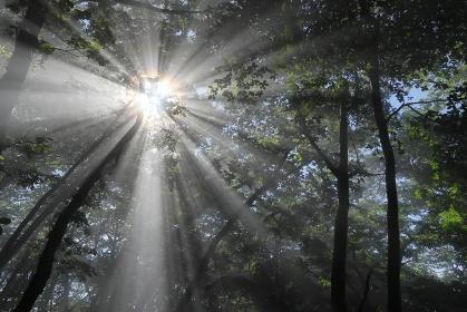 強い日差しを見上げる (強い光芒)