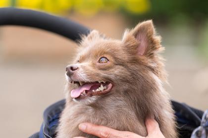人々に可愛がられる小型犬