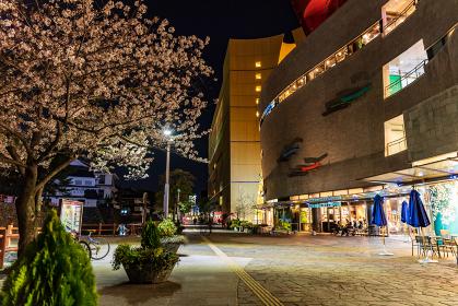 夜の勝山公園と小倉の街並みの夜景