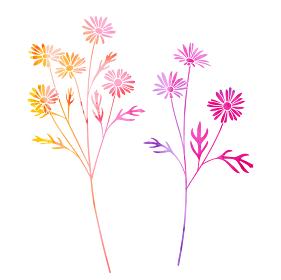 花の水彩イラストセット(マーガレット)