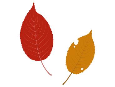 桜の落ち葉のイラスト