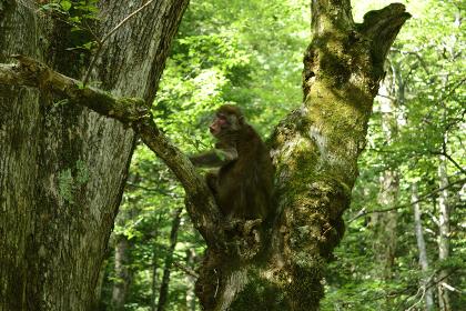 上高地の猿(長野県)