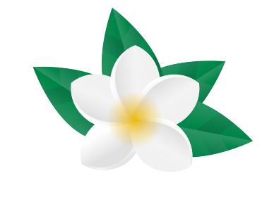 プルメリア 植物 花