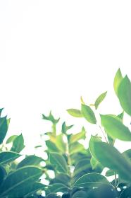 新緑の葉から空を見上げる
