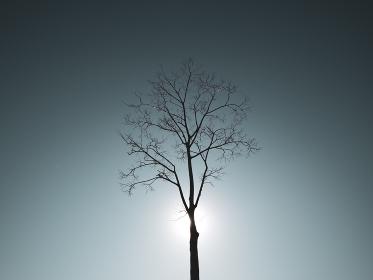 冬枯れの立木のシルエットと光