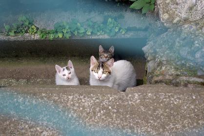 側溝の中からこちらを見つめる親猫と2匹の子猫