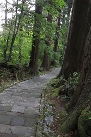 羽黒山の参道石段
