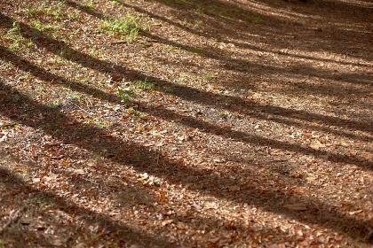 冬の朝低い太陽が大地に木々の影を走らせる