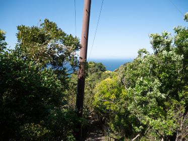 海が見える森の中にある電柱