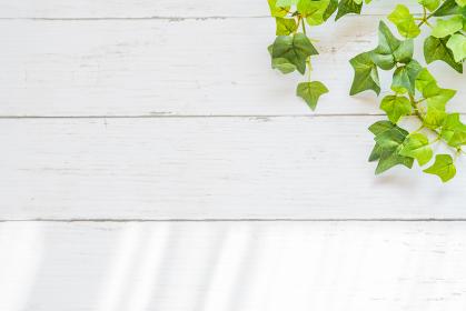 背景素材 植物 葉