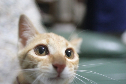 cat,猫,ネコ,ねこ,Katze,chat,gatto,gato,feles,кошка,KAT,