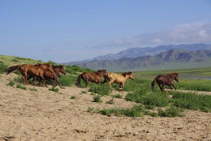 放牧中の馬の群れ