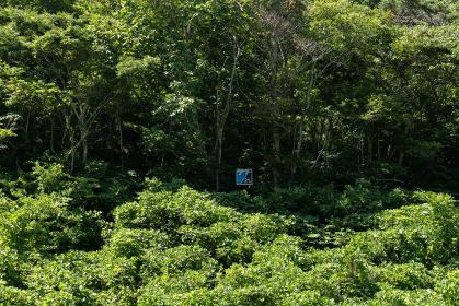 夏の森と津波の遡上高を示す看板 岩手県宮古市