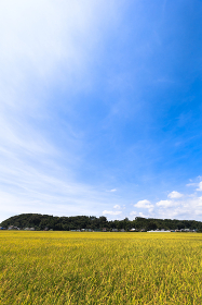 千葉県山武郡横芝光町、8月の城山・日本