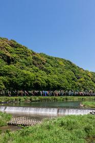紫川の鯉のぼり 北九州市小倉南区