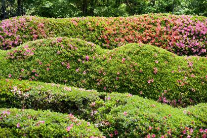 大池寺 蓬莱庭園 滋賀県甲賀市