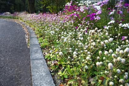 フラワーパークの美しい花々