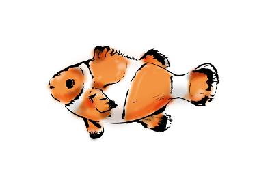 手描きイラスト素材 クマノミ くまのみ カクレクマノミ 熱帯魚