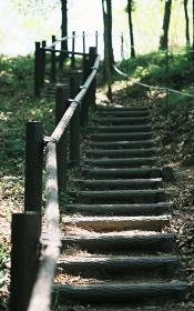 手すりのある森の階段