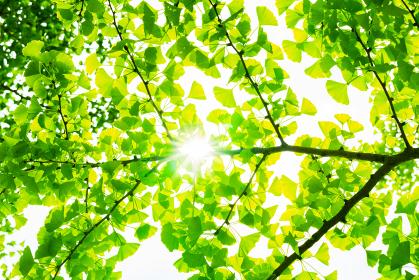 太陽光 再生可能エネルギー 【 カーボンニュートラル イメージ 】