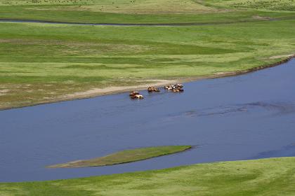 水場に集まる馬