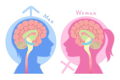 男性脳と女性脳の図表イラスト(心理学・脳のしくみ・背景あり)
