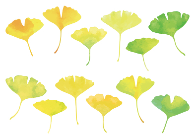イチョウの葉セット 水彩画 緑から黄色に色づくグラデーション