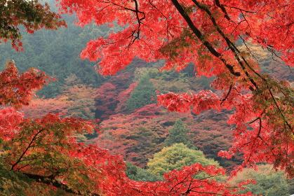 嵐山の紅葉(横アングル)